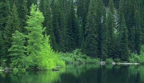 natuur-groen