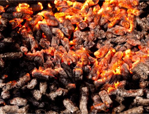Biomassa, hout voor elektriciteit; de feiten